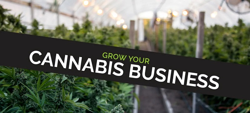 Ways to Grow Your Cannabis Business Organically