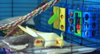 Prevent Boredom in Pet Birds