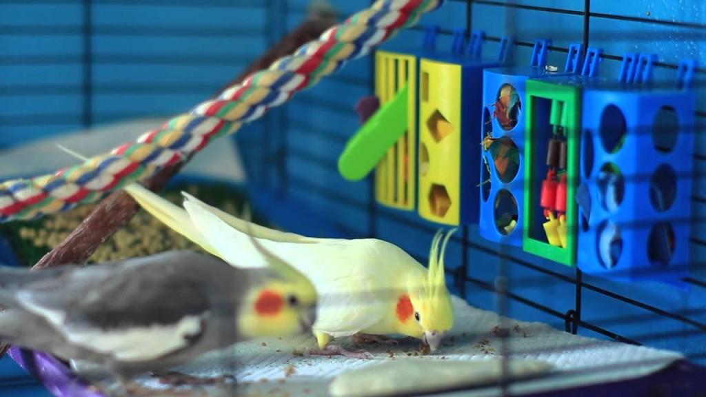 Prevent Boredom in Pet Birds