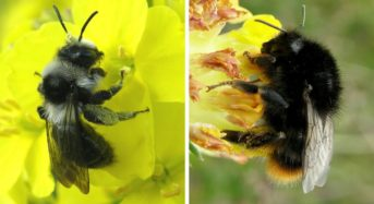 Research Discovers , Damage of honey bees causes deficiency of key food crops