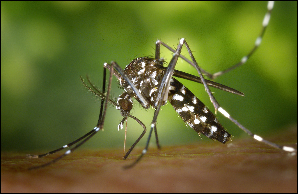 In eastern Washington First instances of West Nile Virus detailed