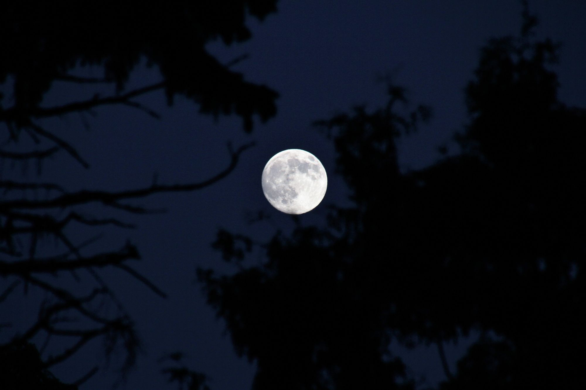 The first full moon of 2021 : When to watch the 'Wolf Moon'
